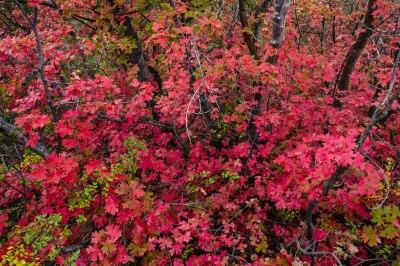 Herbstlaub-Komposition, das meiste Rot ist jedoch bereits verblasst...