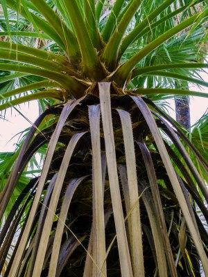 Mountain Palm Springs CG, Anza Borrego