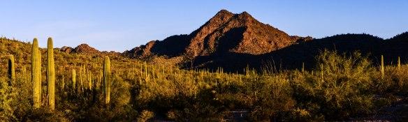 Twin Peaks und Saguaros