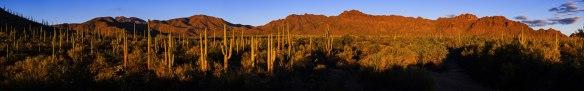 Nochmals die Tucson Mountains im Abendlicht
