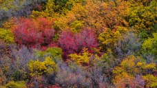 Herbst im Provo Canyon