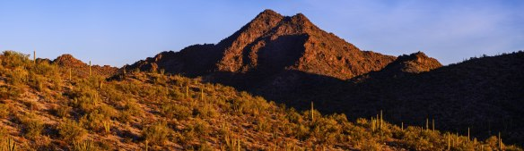 Twin Peaks und lauter Saguaros...keine Orgelpfeifen weit und breit.....
