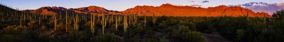 Tucson Mountains im letzten Abendlicht