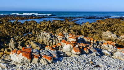 Cape Agulhas - am wilden Strand