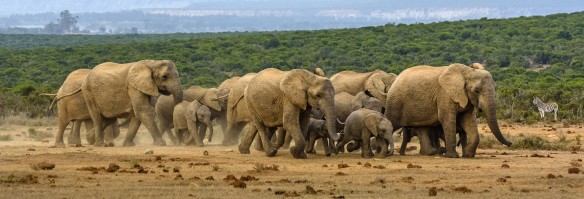 Addo Elephant NP - ohne Worte