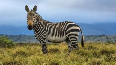 Mountain Zebra NP - Endlich ein Zebra!