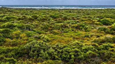 Cape Agulhas - Blick aus dem Stubenfenster