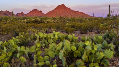 Tucson Mountains - Focus Stacking