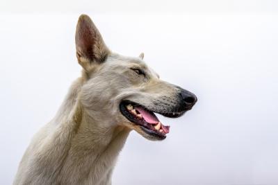 Lambert's Bay - streunender Hund