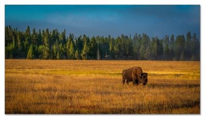 Yellowstone NP in der Früh....