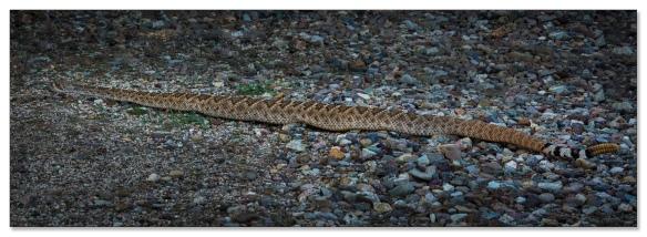 Klapperschlange, Gilbert Ray CG, Tucson