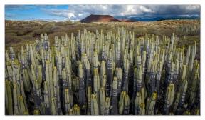 Malpais de la Rasca, Tenerife