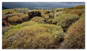 Malpais de Güimar, Tenerife
