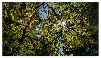 Im Hoh Regenwald, leider mit viel Sonne.....