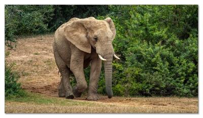 Addo Elephant NP, Südafrika