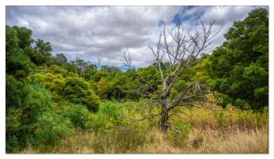 Tower Hill Wildlife Reserve, VIC