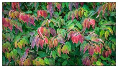 Herbst in Langnau